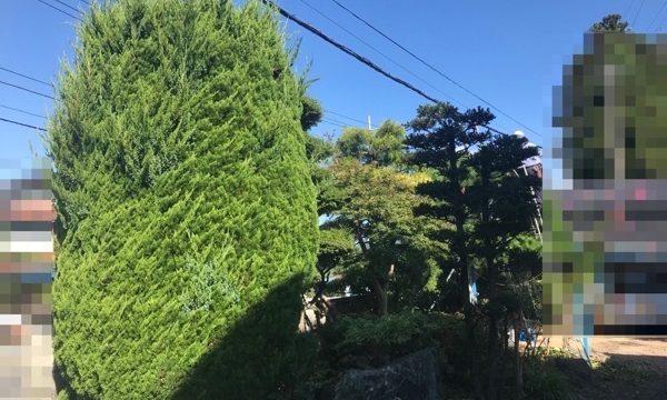 庭木(剪定前)