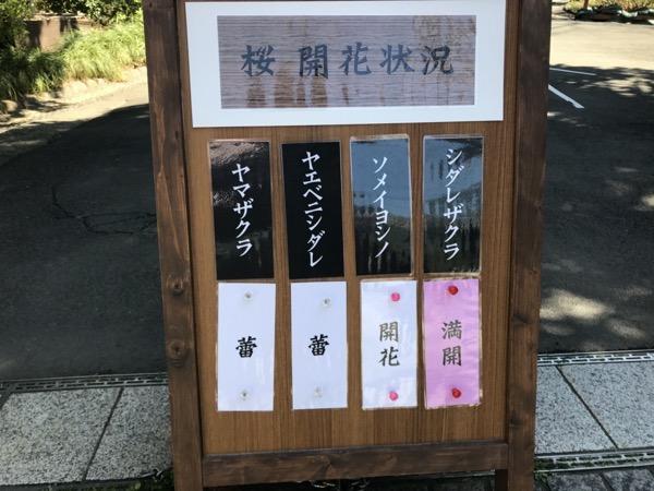 小石川後楽有縁の桜